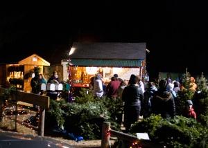 Noel's Tree Farm